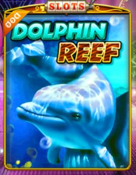 Pussy888-Dolphin Reef